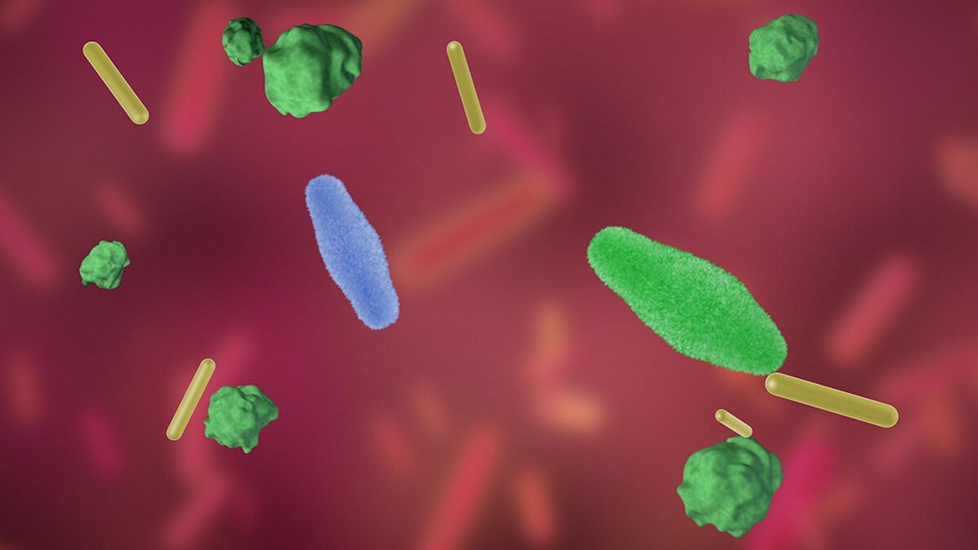 Полезные пробиотики становятся вредными, попадая в кишечник