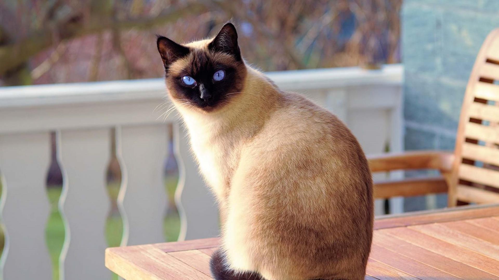 Знают ли котики свое имя?