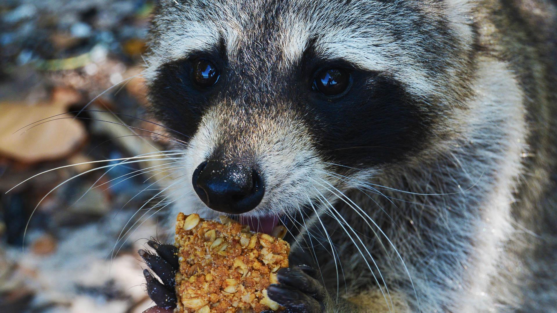 Контактные зоопарки могут создавать условия для передающихся посетителям бактерий с лекарственной устойчивостью