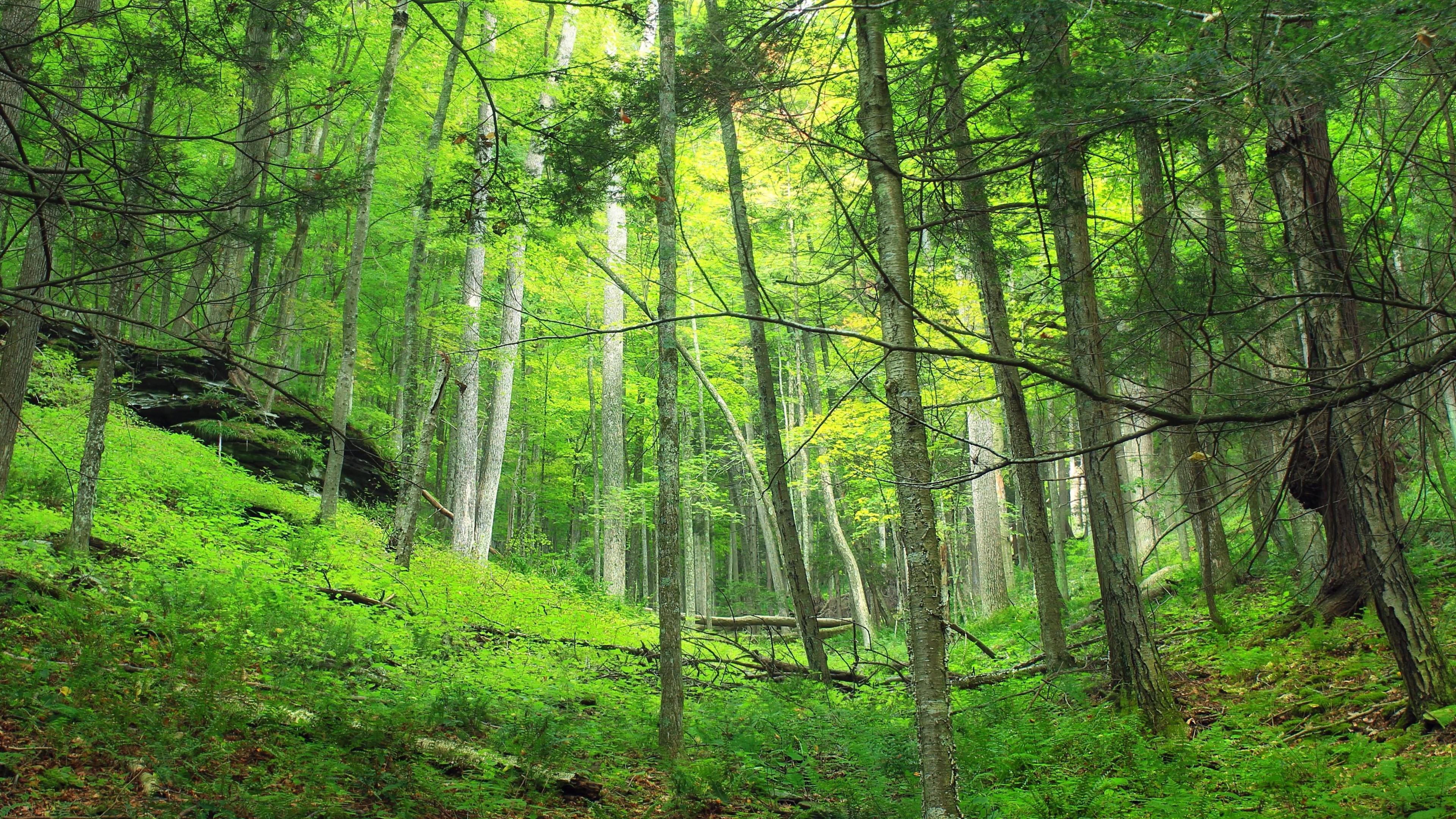 Глобальное озеленение. Чем грозит планете борьба против роста выбросов углекислого газа