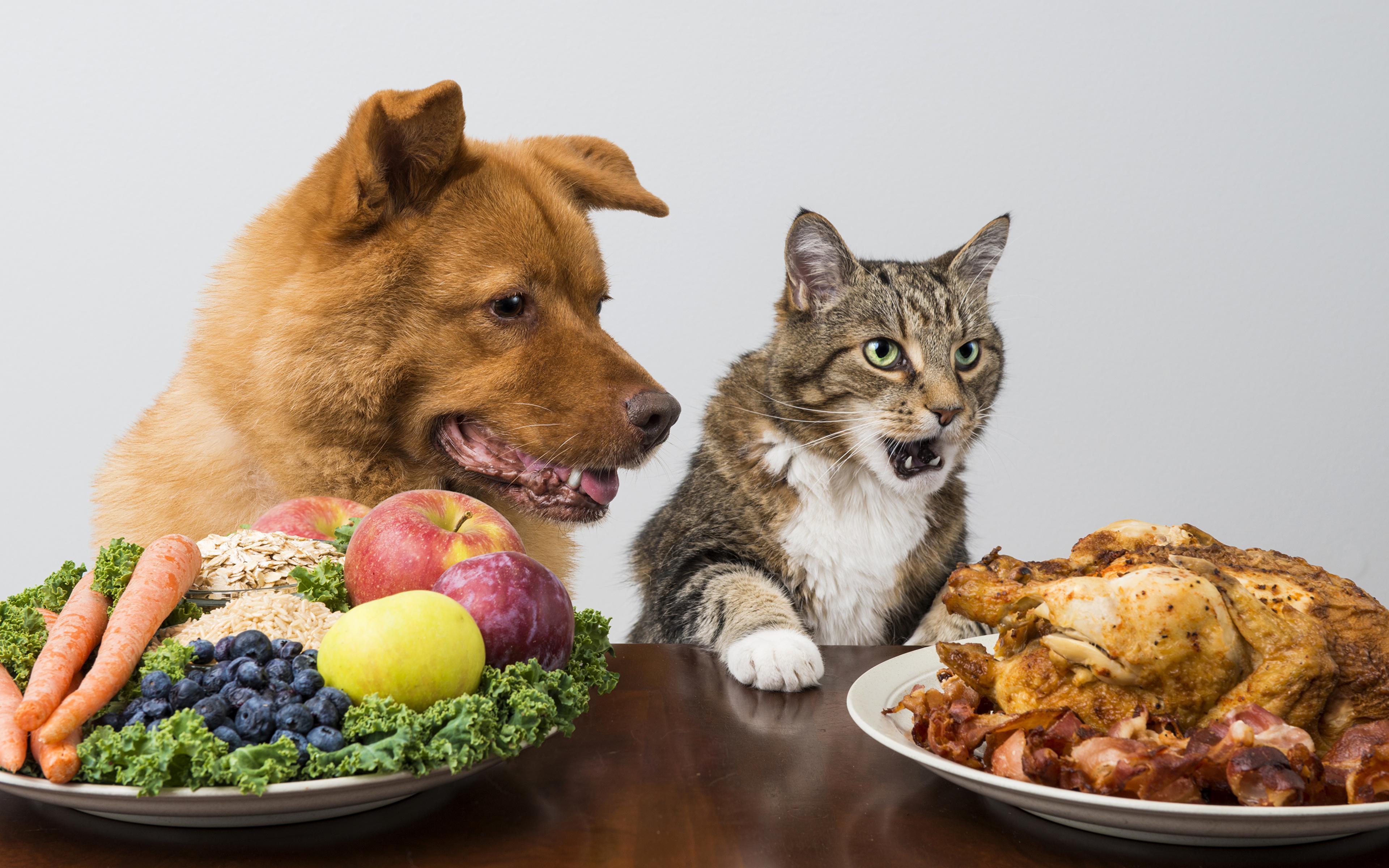 К чему приводит принуждение домашних животных к вегетарианству