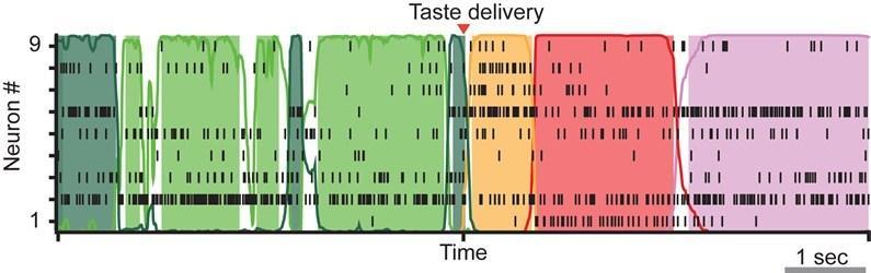 Ожидание стимула изменяет нейронную активность