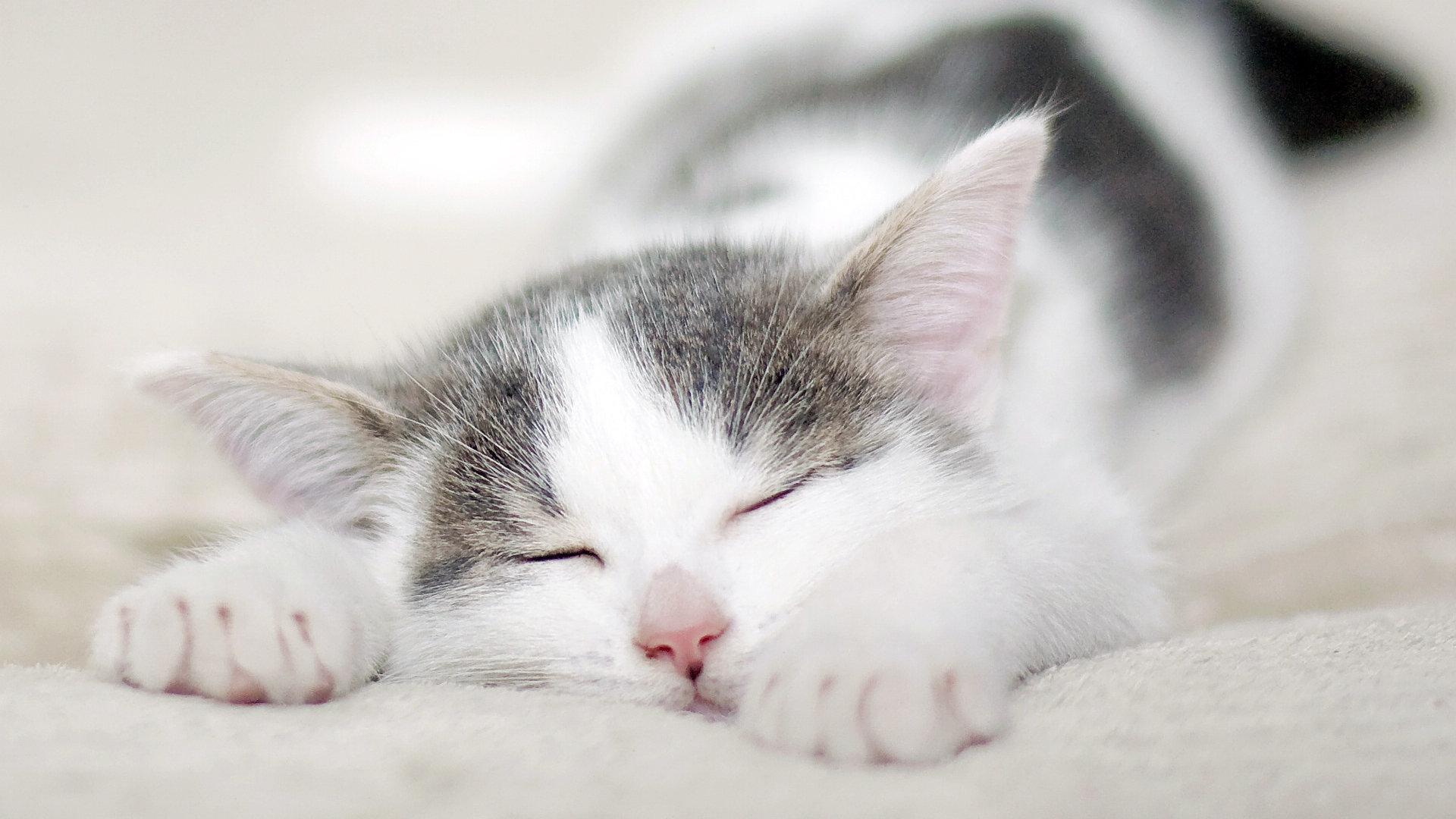 Храп-убийца, или почему не стоит верить мифам о сне