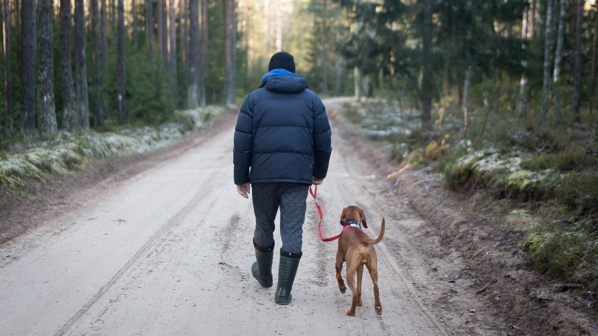 Собаки помогают людям достаточно двигаться