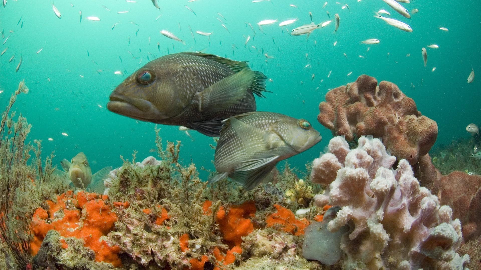 Популяции морских животных исчезают вдвое быстрее, чем наземные виды