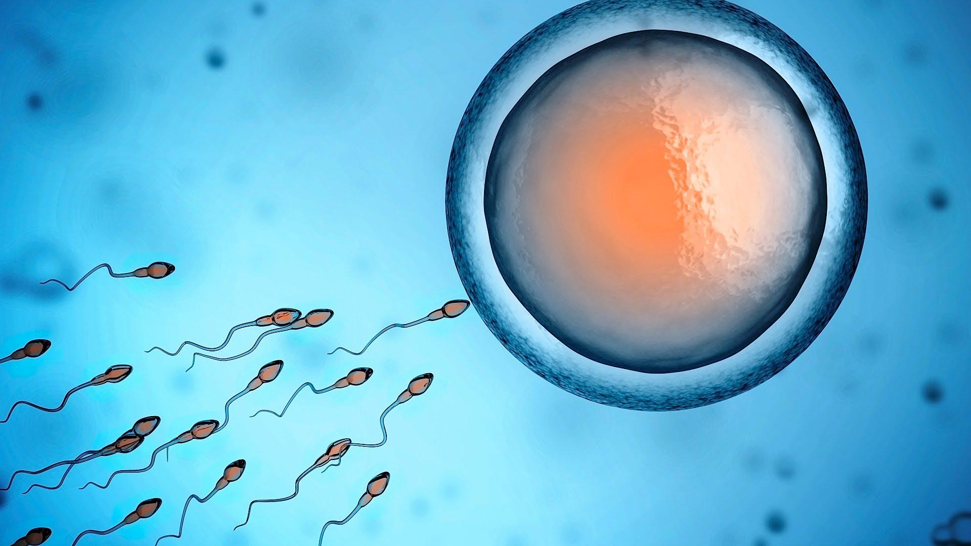 Виноваты ли в выкидышах плохие сперматозоиды?