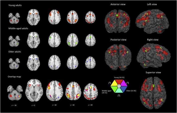 Как мозг перестраивает рабочую память с возрастом
