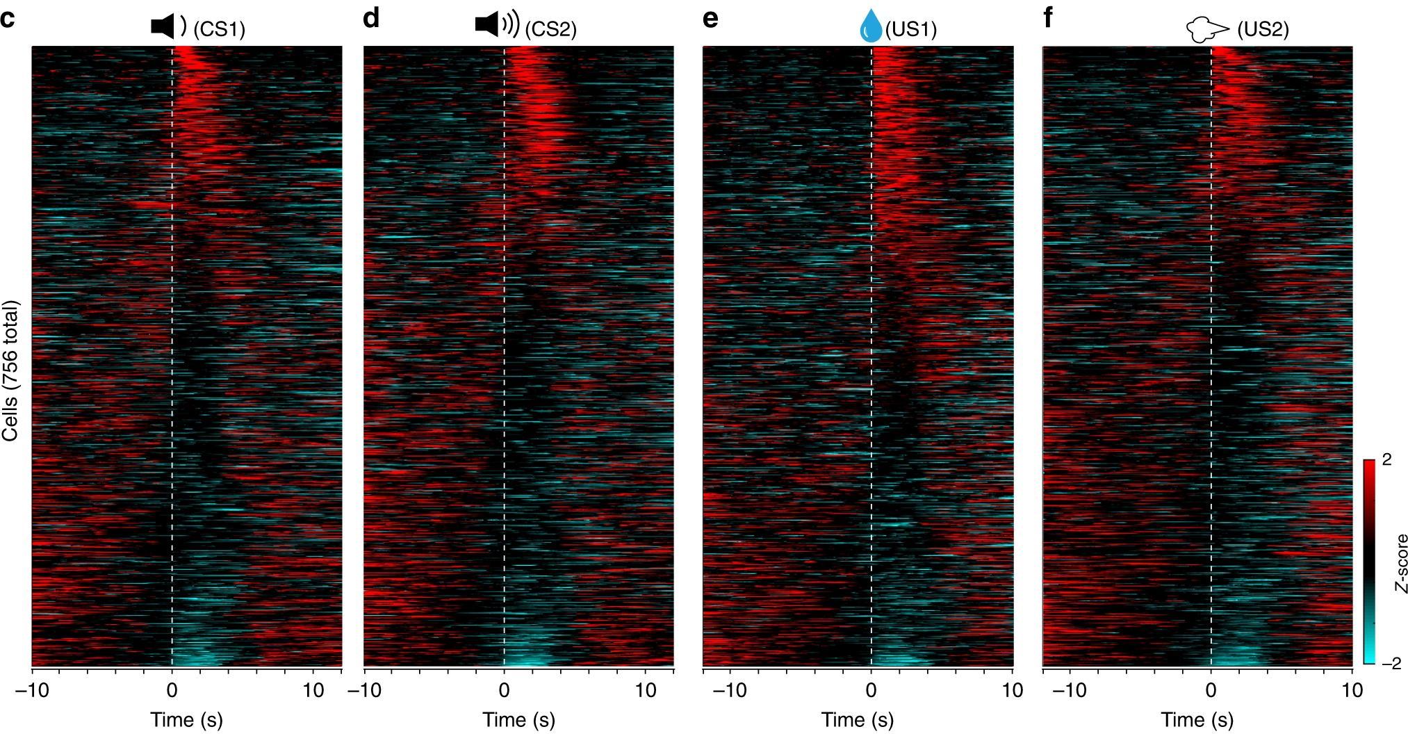 Эксперименты с мозгом мышей показали, как определенный звук вызывает страх