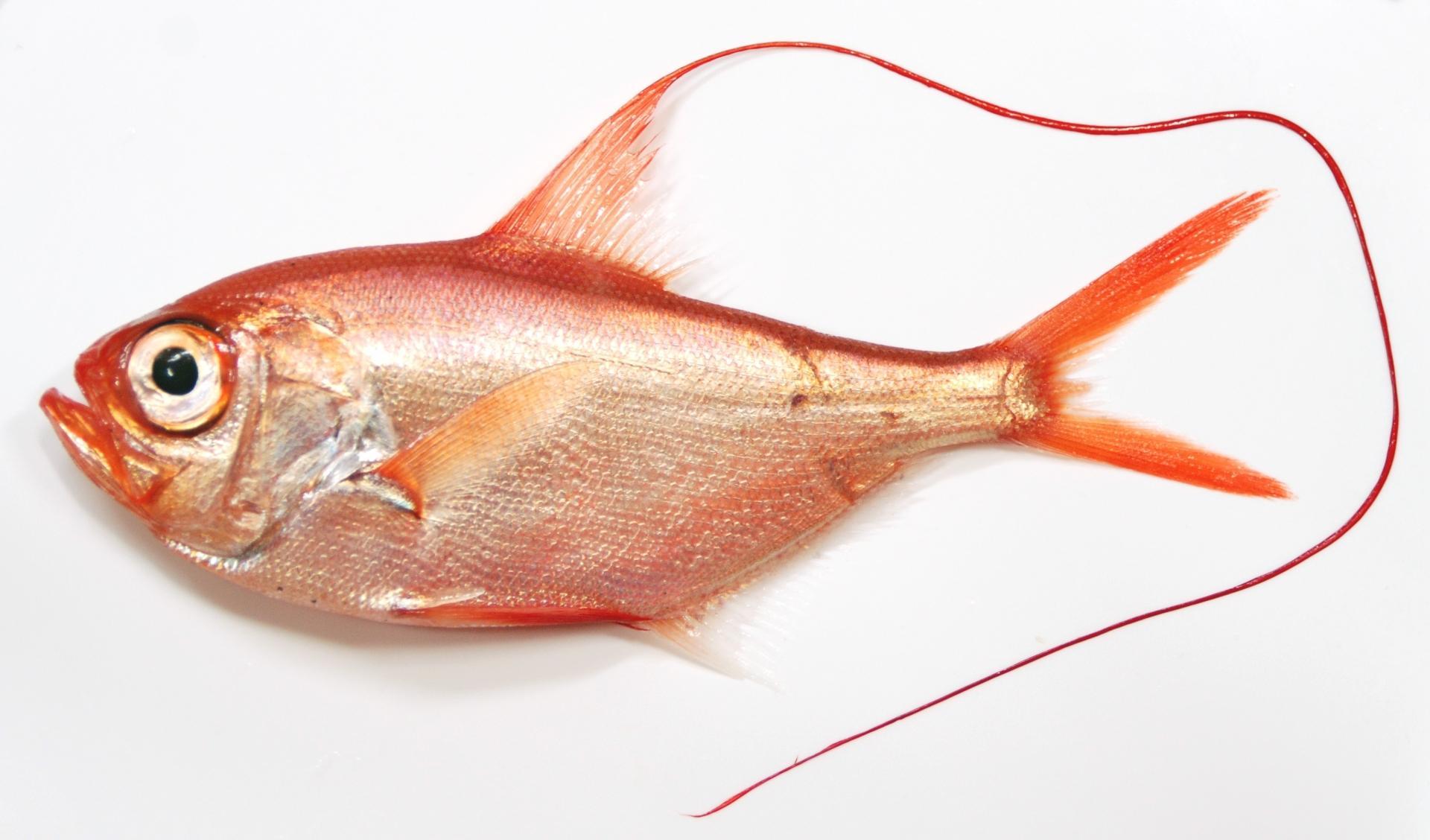 Суперзрение глубоководных рыб