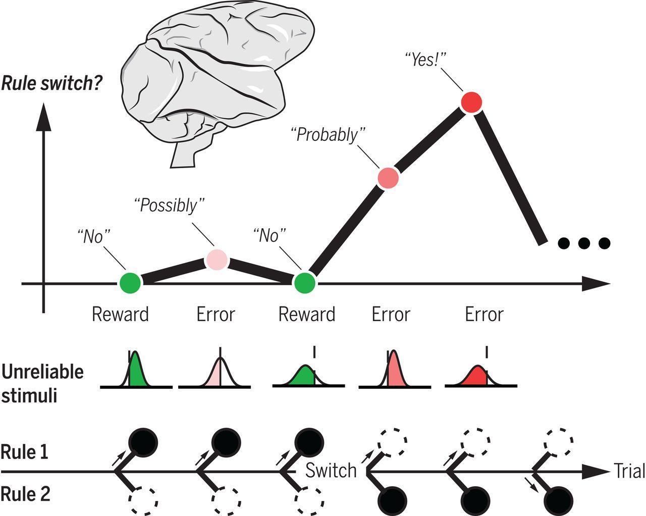 Нейронные механизмы принятия решений