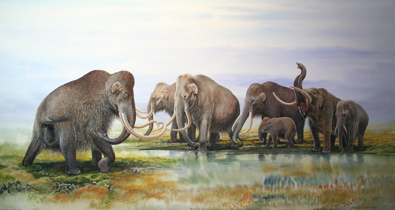 Слон в плейстоценовой лавке. Как и зачем люди пытаются вернуть исчезнувшие виды животных