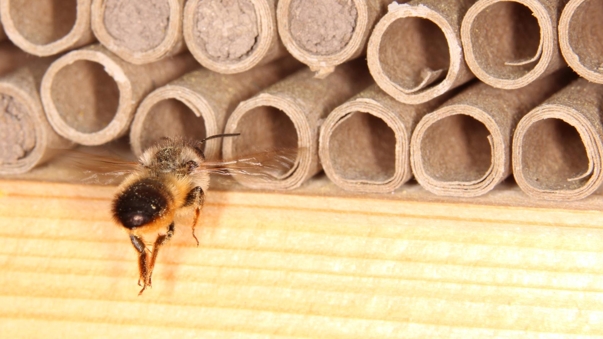 Дикие пчёлы начали строить гнёзда целиком из пластика. О чём это нам говорит?