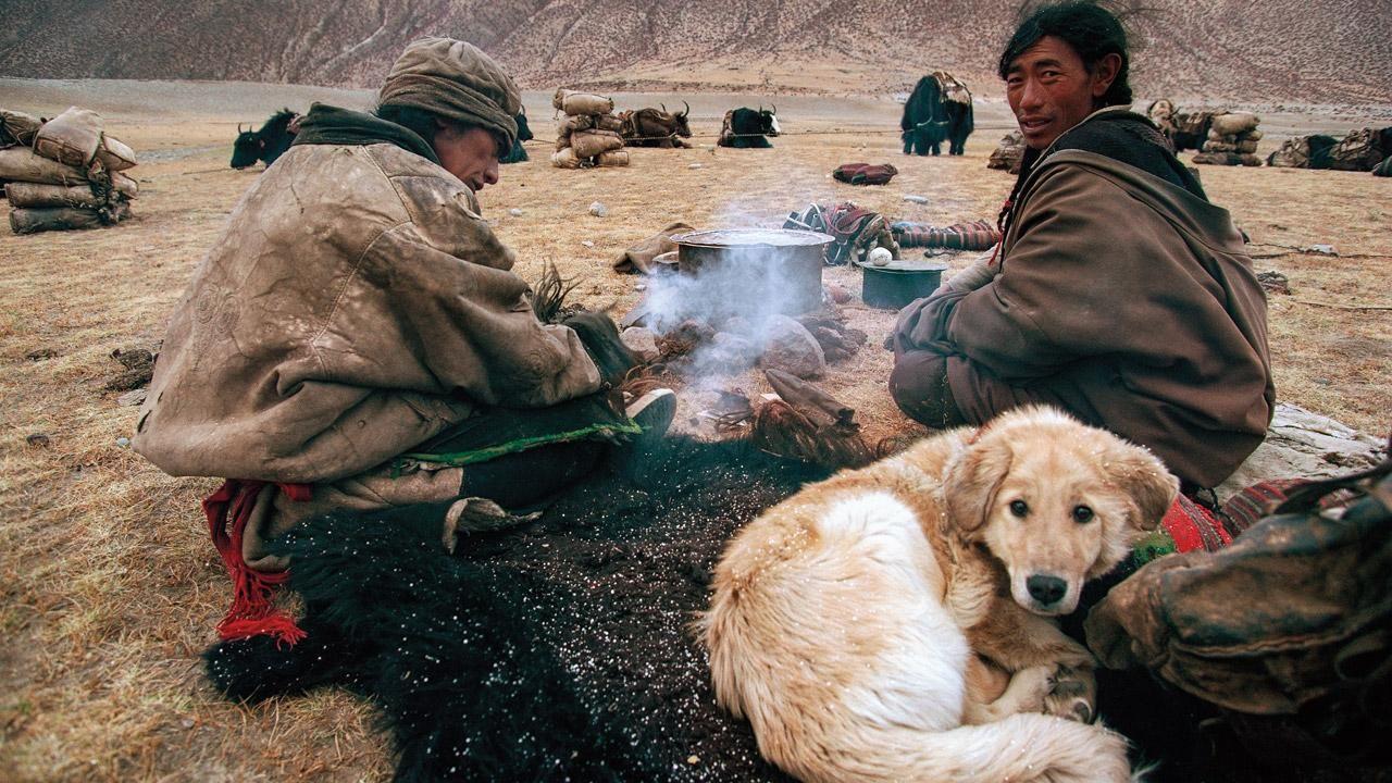 Деформации позвоночника собак связали с одомашниванием