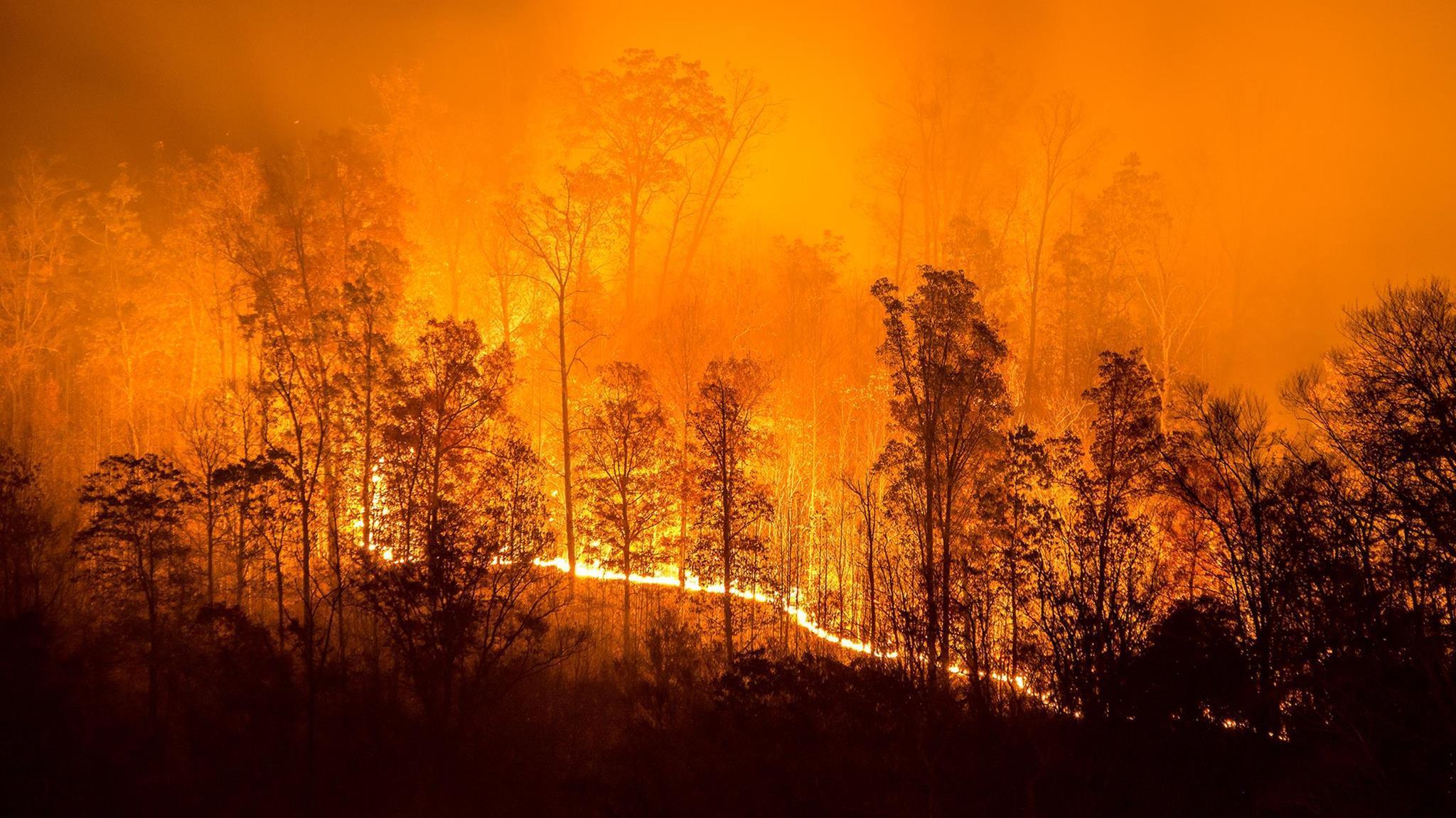Когда, какие и зачем нужны лесные пожары? Опыт коренных американцев