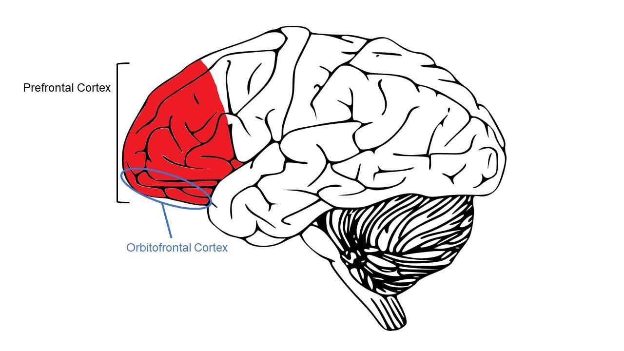 Привычки мозга: как переключиться с автомата на сознательное действие