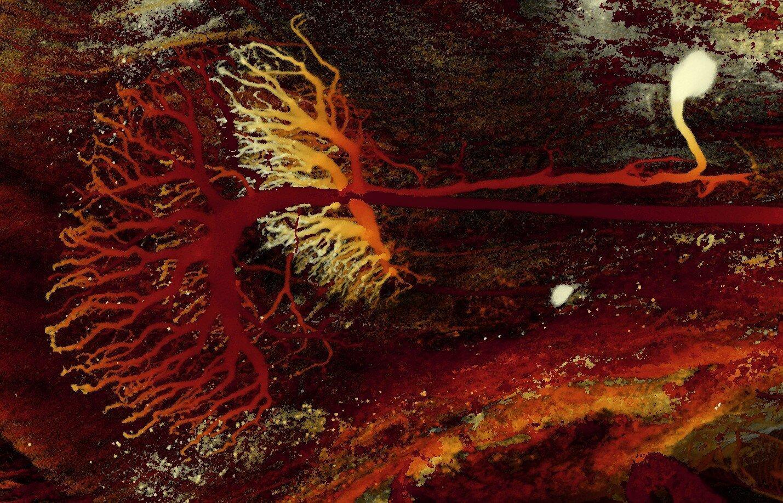 Запечатлены нейроны богомола отвечающие за трёхмерное зрение