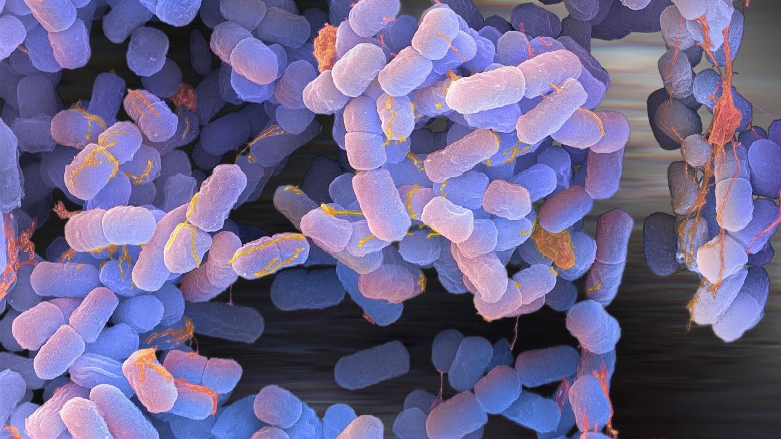 Бактерии помогают лечить рак