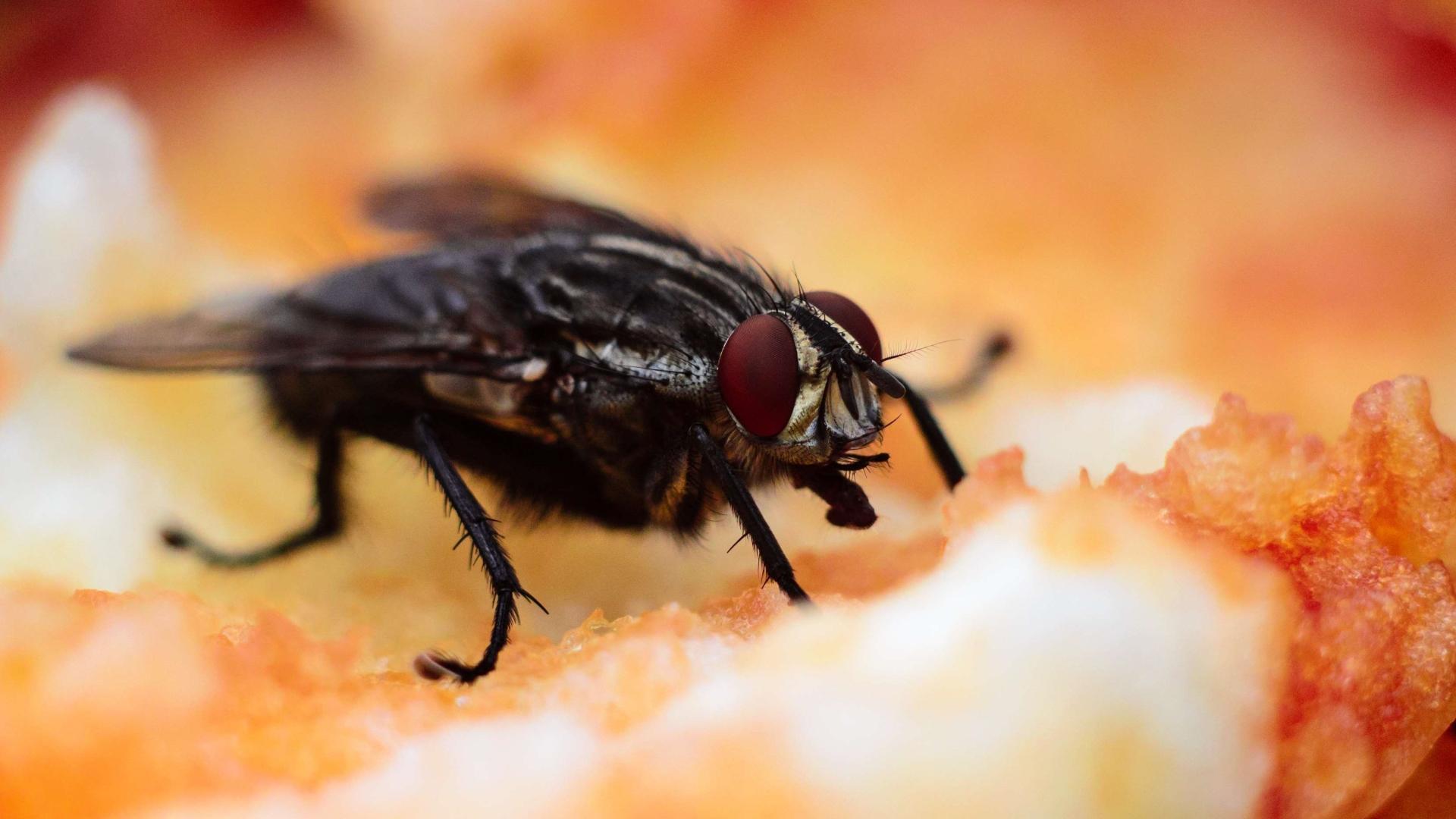 Оптогенетика изменяет вкус еды