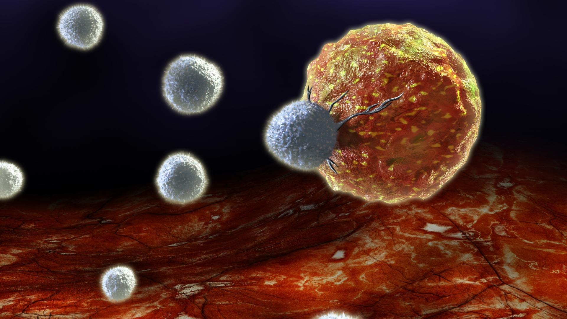 Обнаружена группа клеток, способных восстанавливать ткани человеческого тела