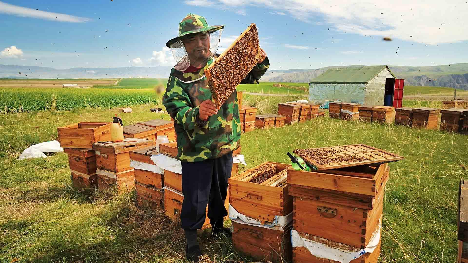 Пчелиные вирусы убивают шмелей, распространяясь через цветы