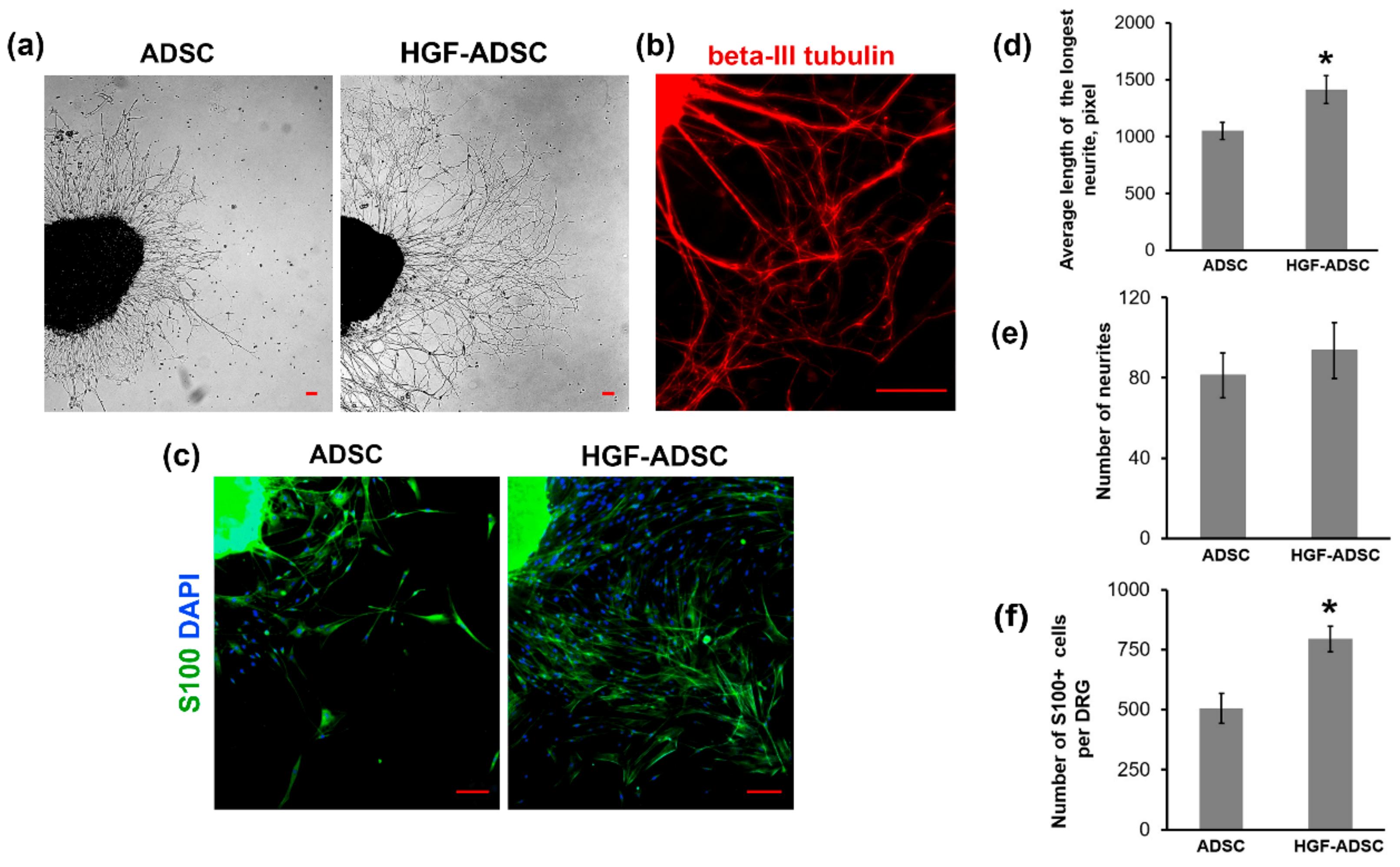 Клеточные пластыри восстановят ткань после ишемии
