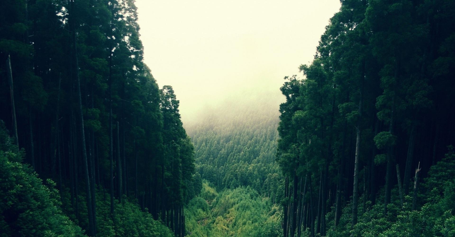 Как справиться с изменением климата? Посадить триллион деревьев