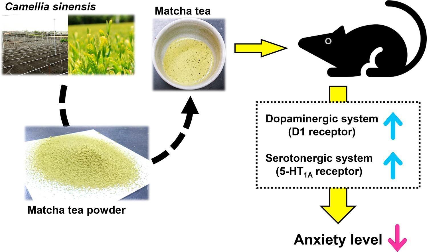 Чай маття снижает тревожность