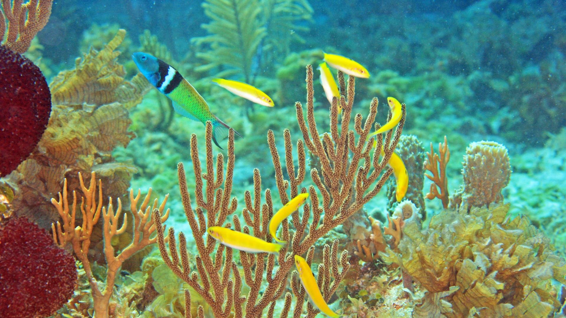Меняющая пол рыба и её секреты
