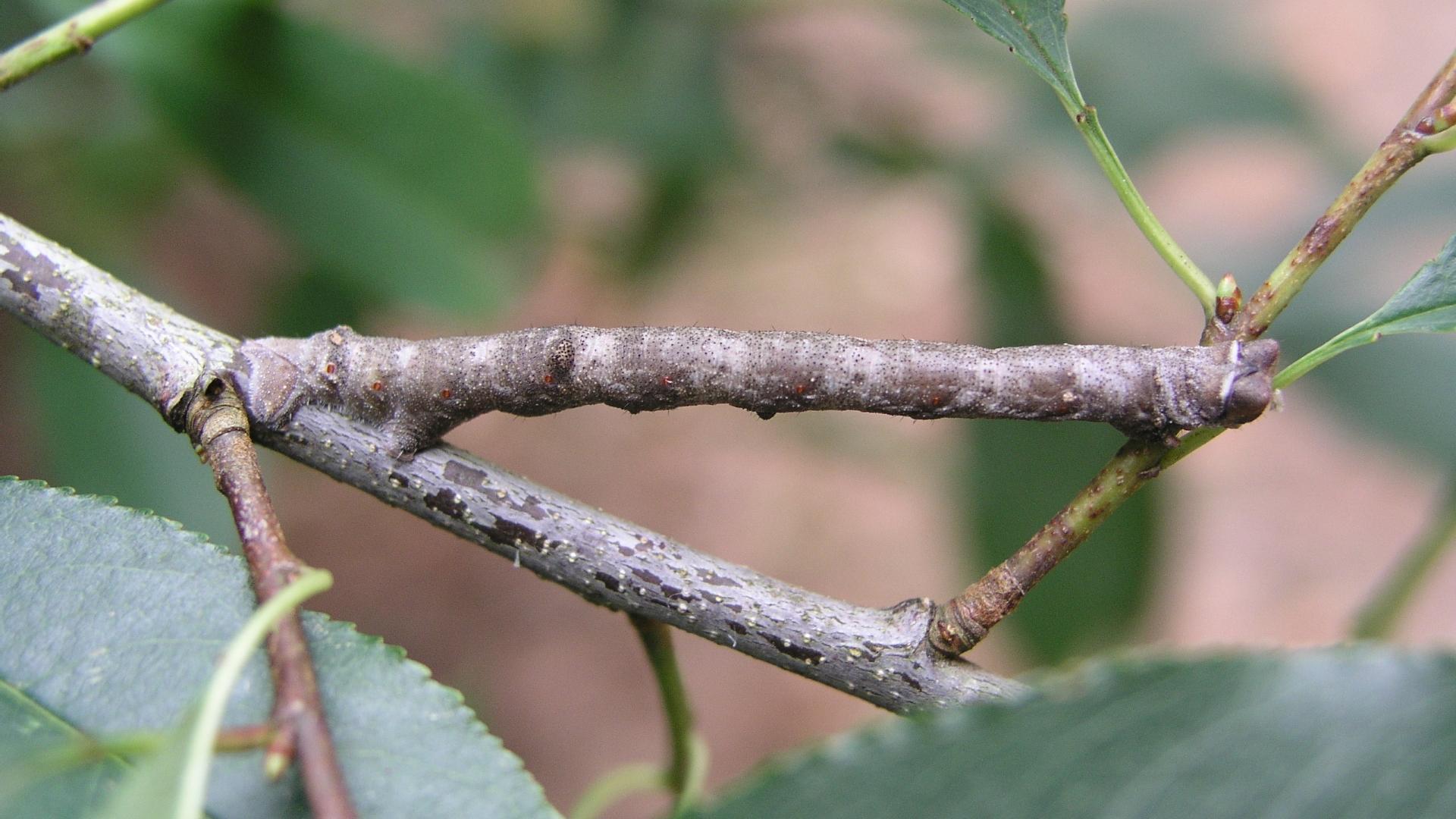 Гусеницы чувствуют цвет всей кожей