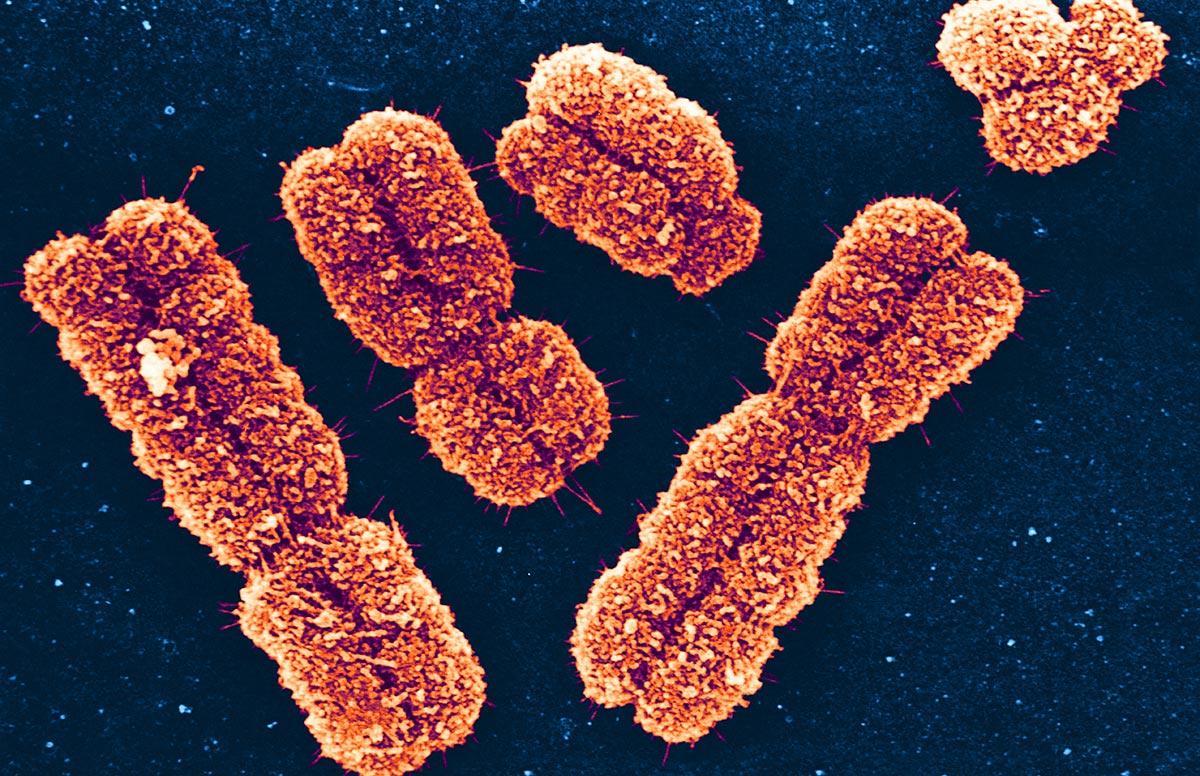 Как важные гены оказались неважными