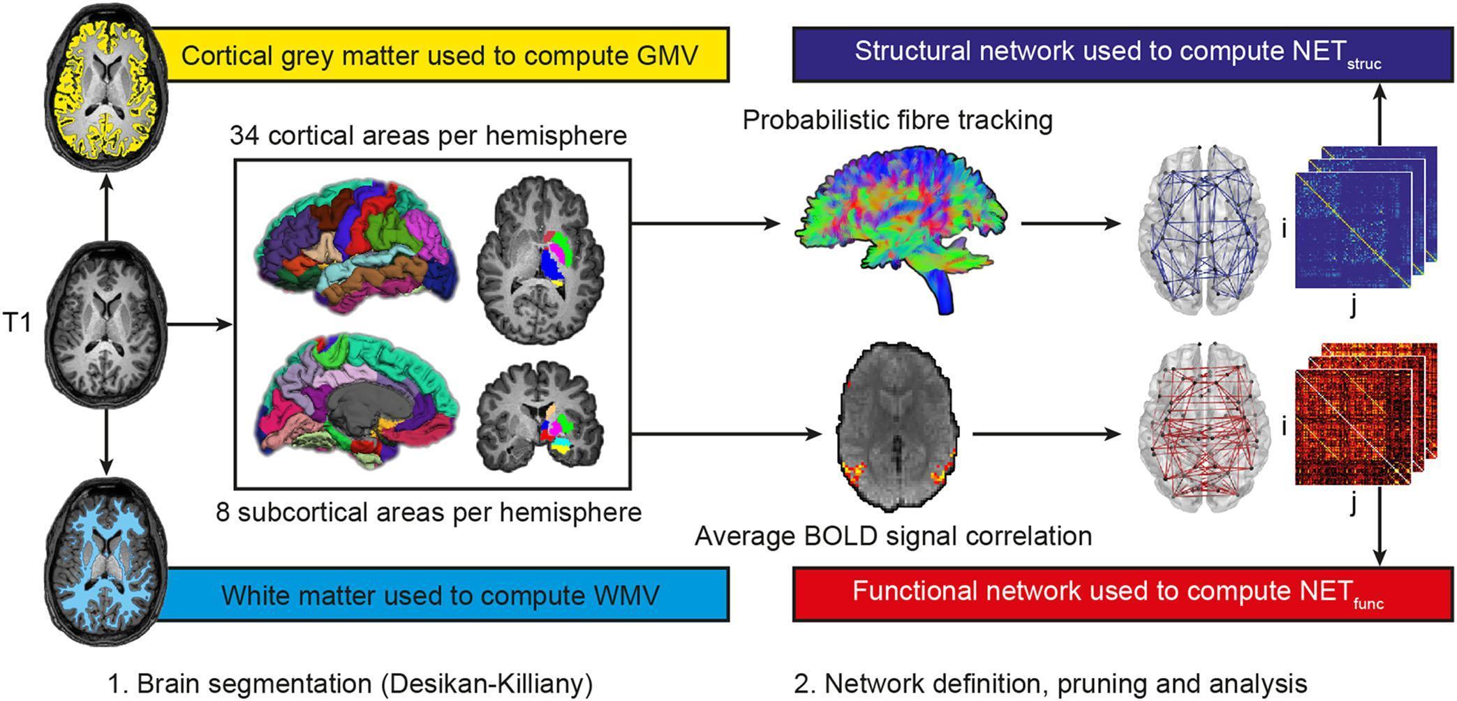 Особенности мозга эрудированного человека