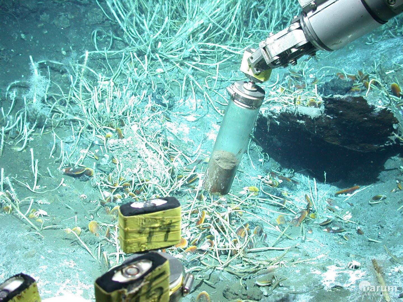 Археи научились добывать метан из нефти без использования кислорода