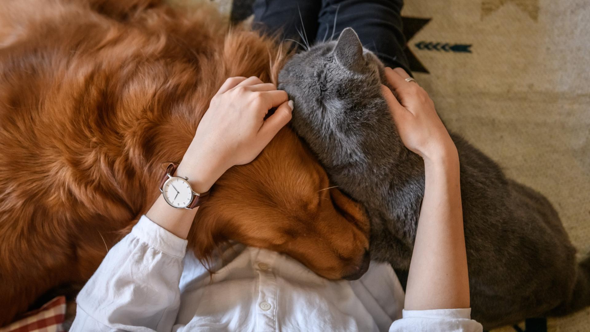 Домашние животные спасут нашу жизнь от стресса