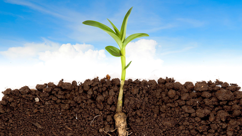 Бактерии помогли растениям выйти на сушу