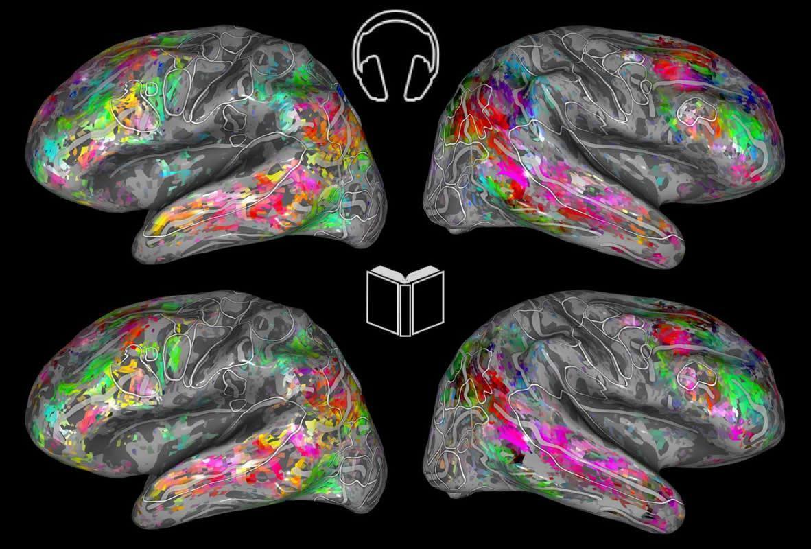 Карта мозга смогла показать, что читает человек