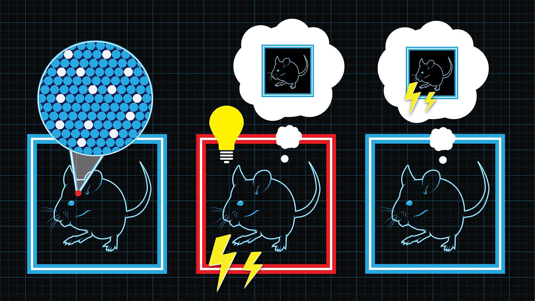Учёные впервые создали полностью искусственное воспоминание