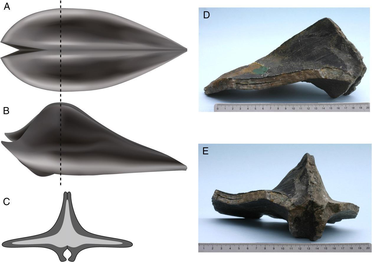Палеонтологи нашли еще одно массовое вымирание в пермском периоде