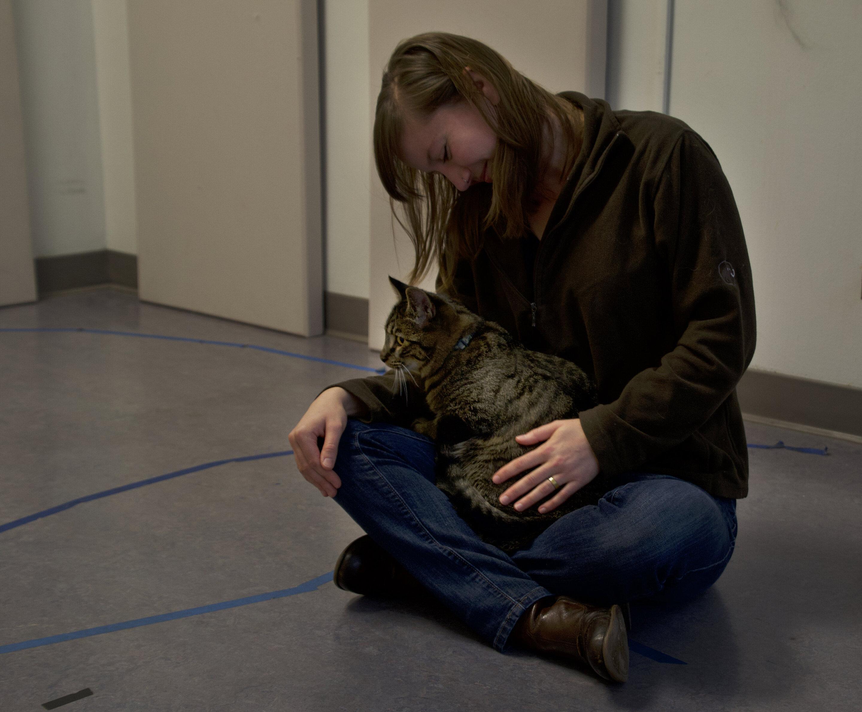 Кошки любят людей