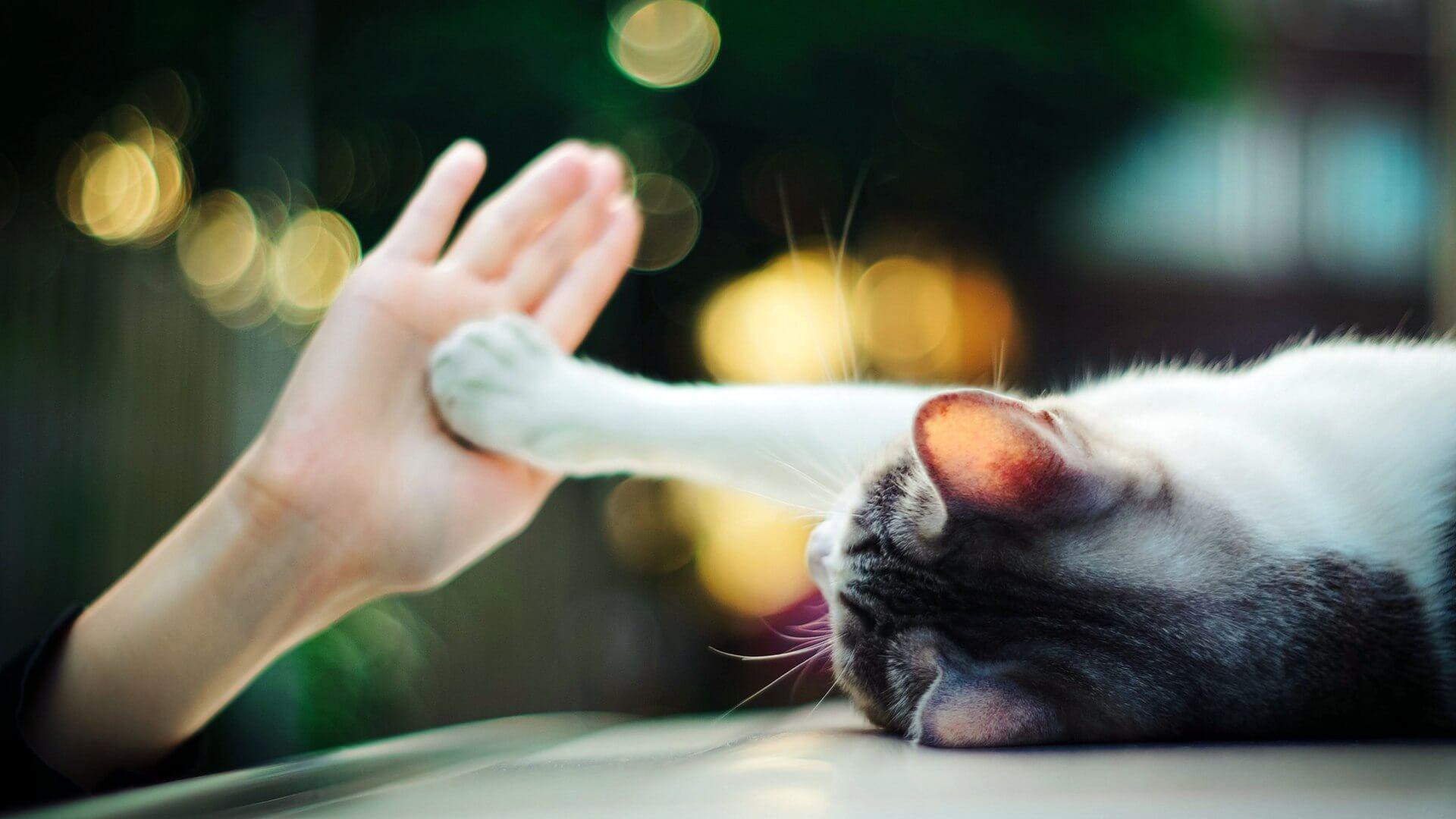 Кошки преданы хозяевам не меньше, чем собаки