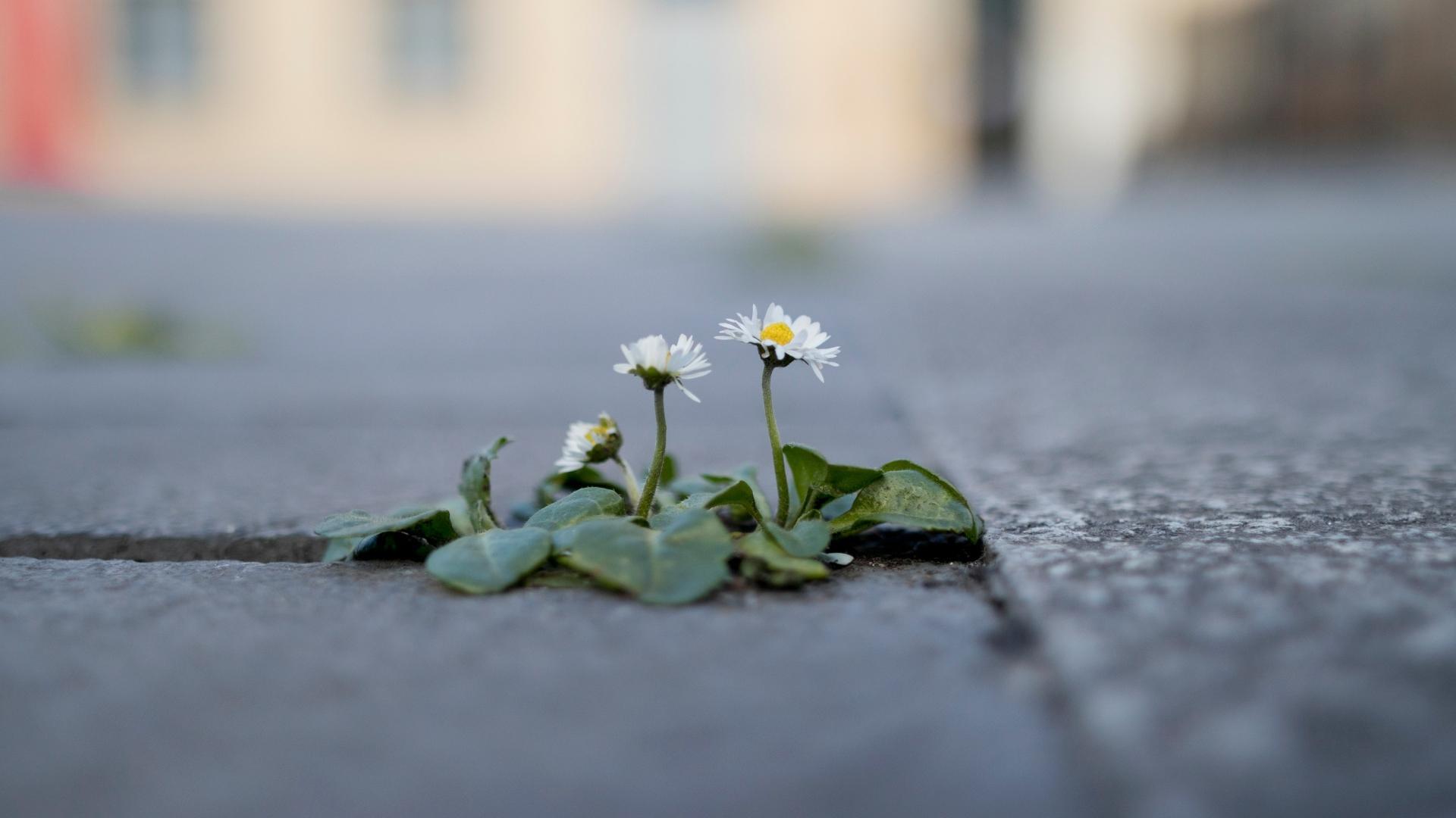 Растения вымирают в сотни раз быстрее обычного