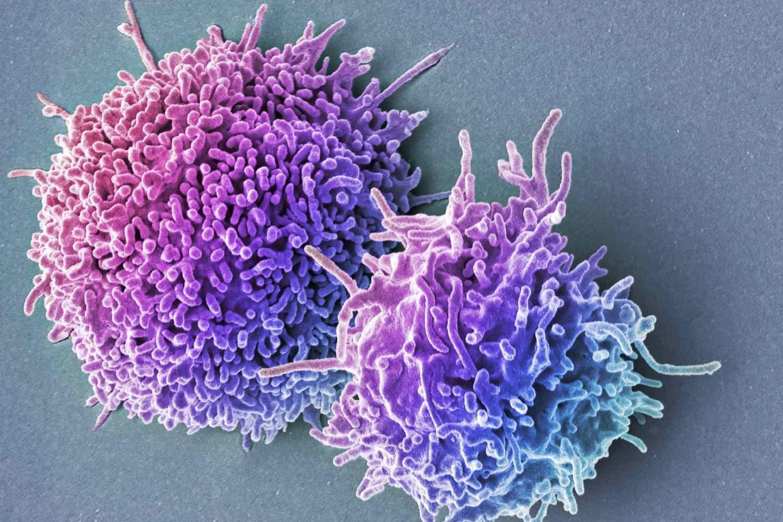 Слабая иммунная память делает бактерий сильнее