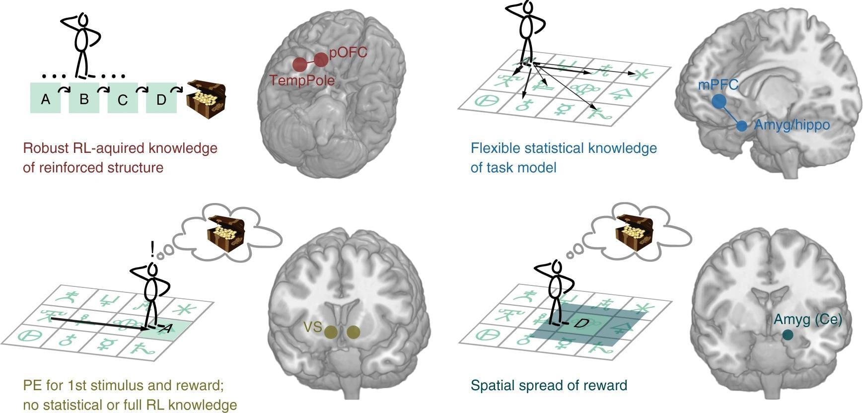 Мозг по-разному сохранил выученную информацию