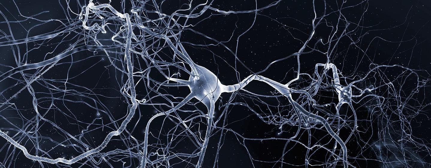 Нейронный шум помогает учиться