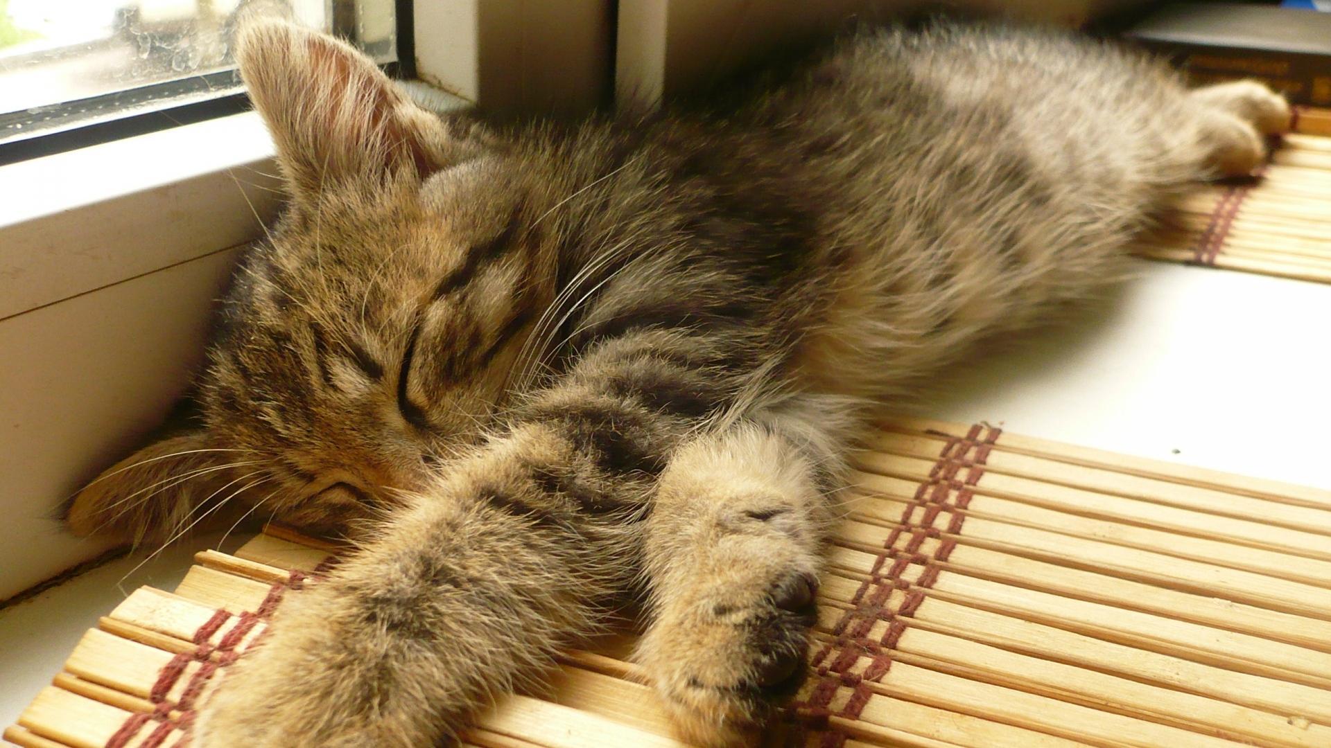 Дневной сон снижает риск сердечно-сосудистых заболеваний