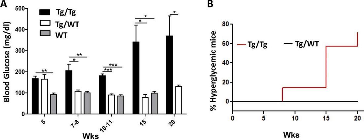 Экстракт поджелудочной железы заразил мышей диабетом