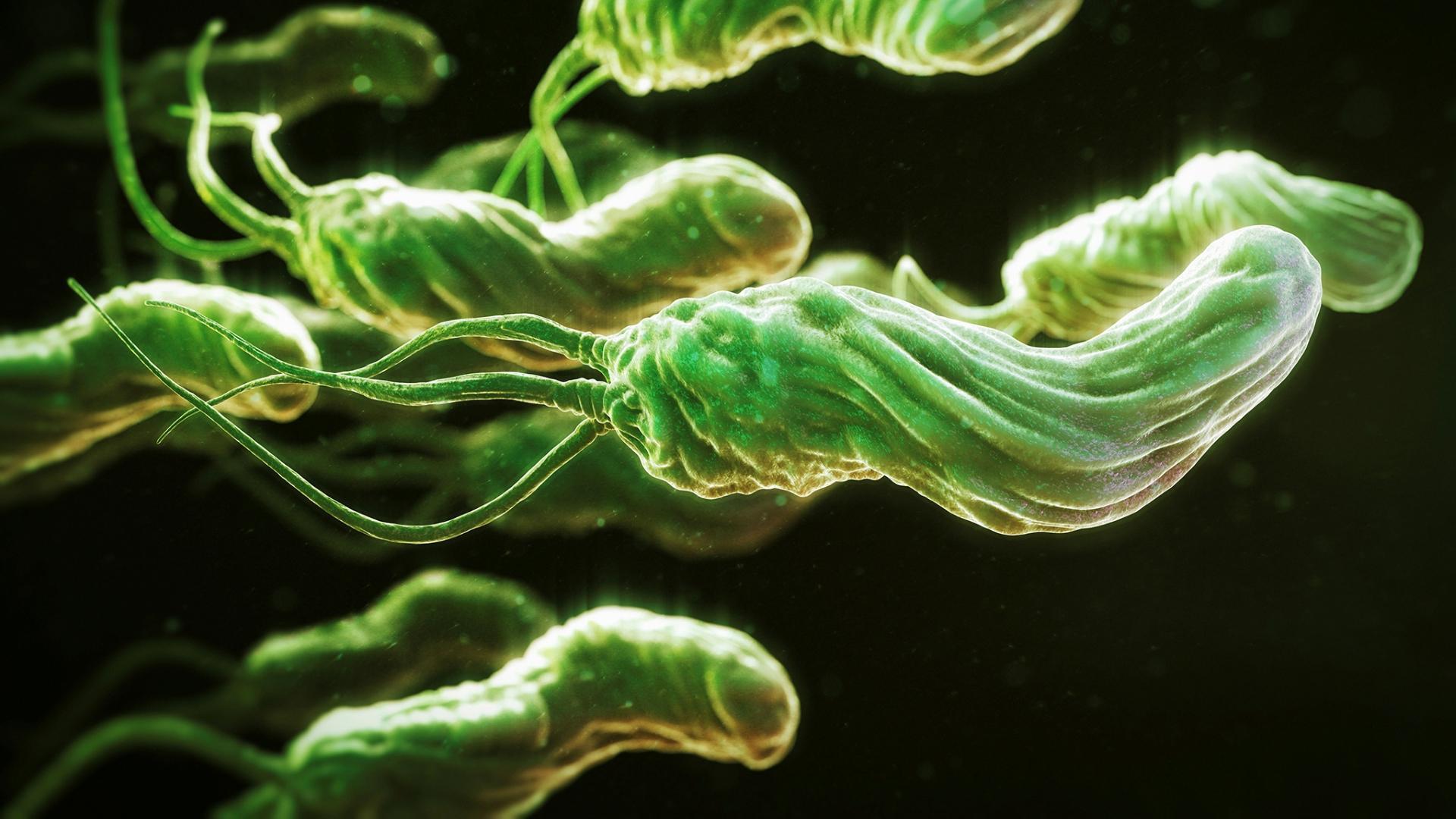 Helicobacter pylori стала в два раза более устойчивой к антибиотика