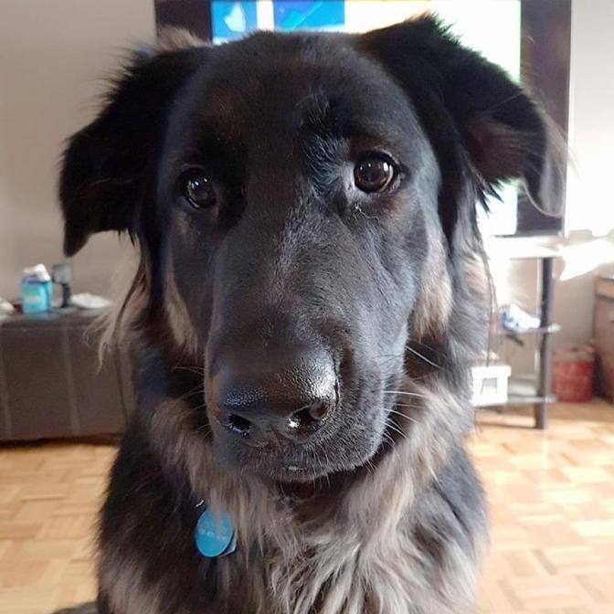 Моя собака ела шоколад и отлично себя чувствовала, так в чём же дело?