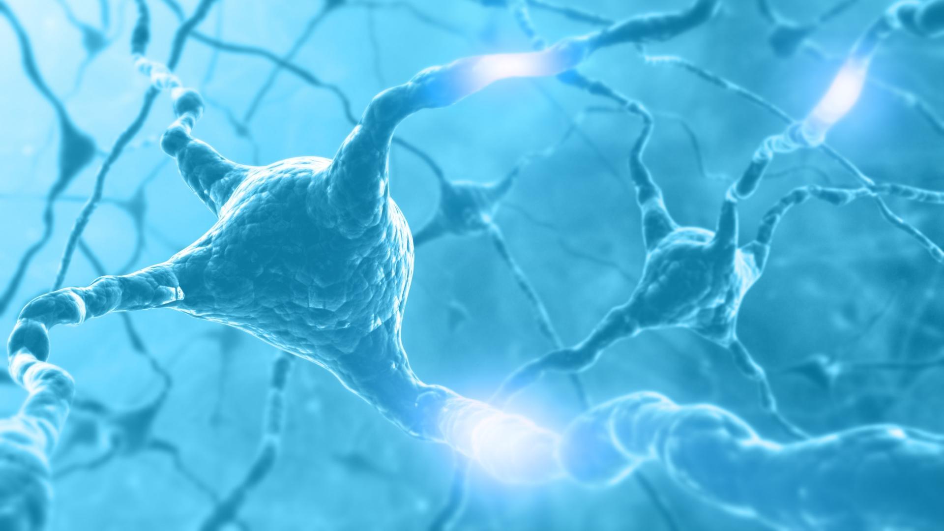 Слишком активные нейроны сокращают жизнь