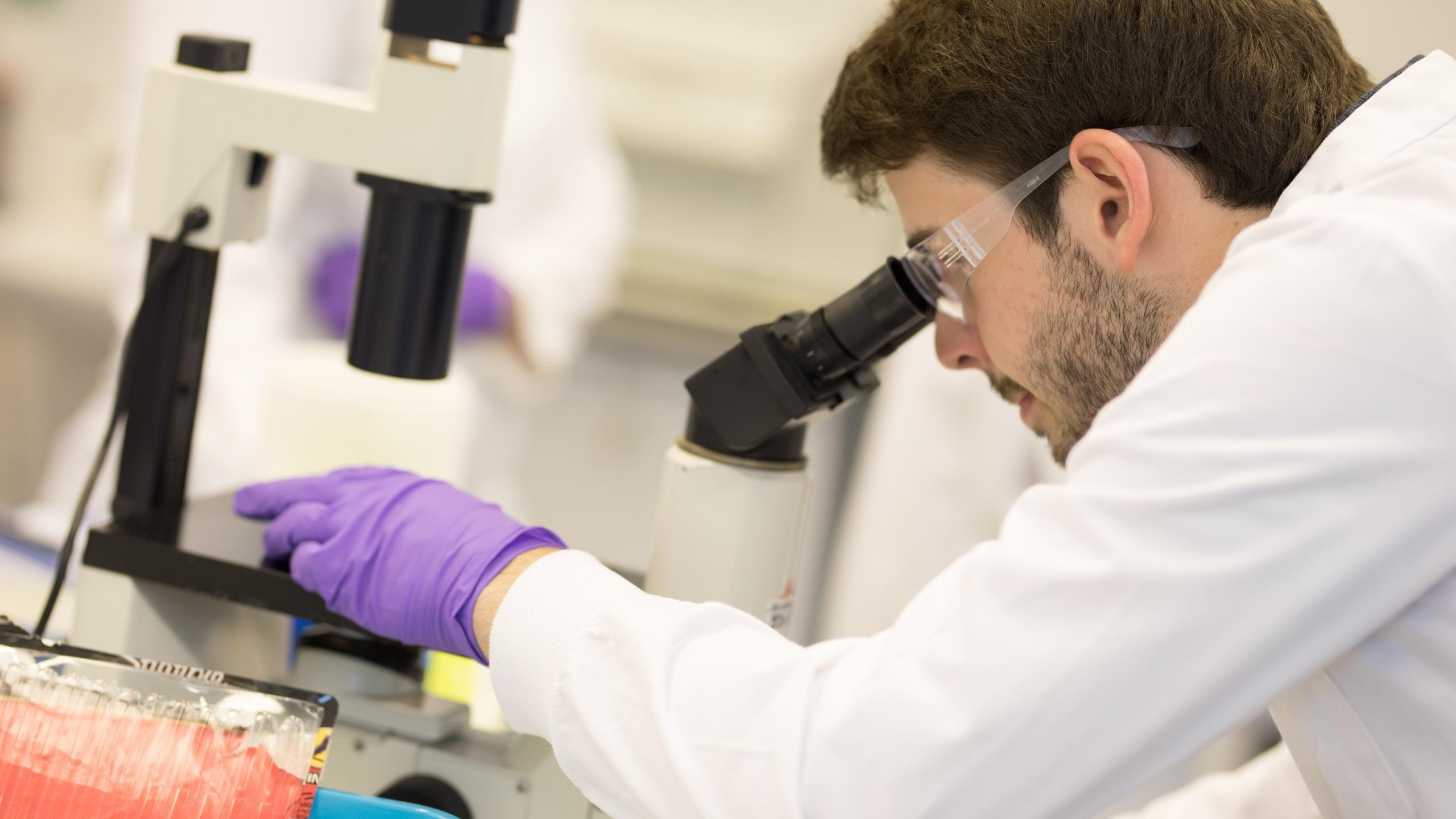 Чувство свежести в каждой клетке: что открыли нобелевские лауреаты по медицине