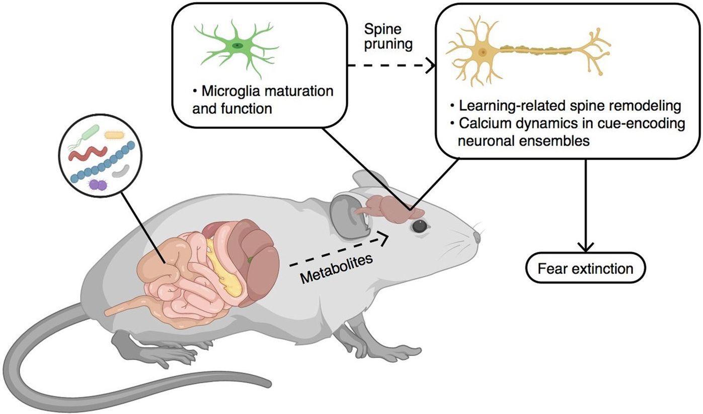 Микробы против страха